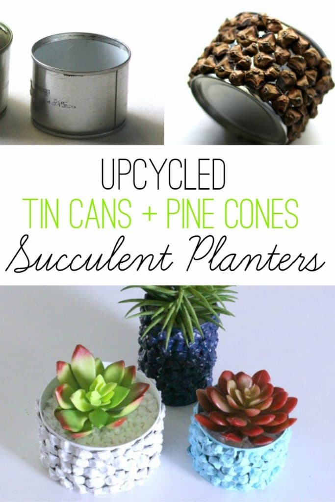 Tin Can Pine Cone Succulent Planters